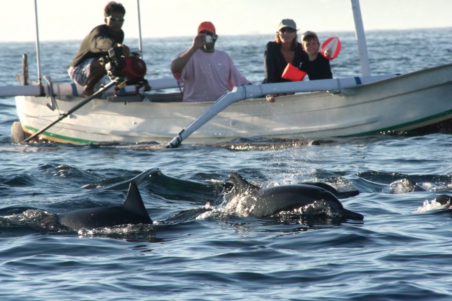 Bali 2 days 1 night with dolphin tour
