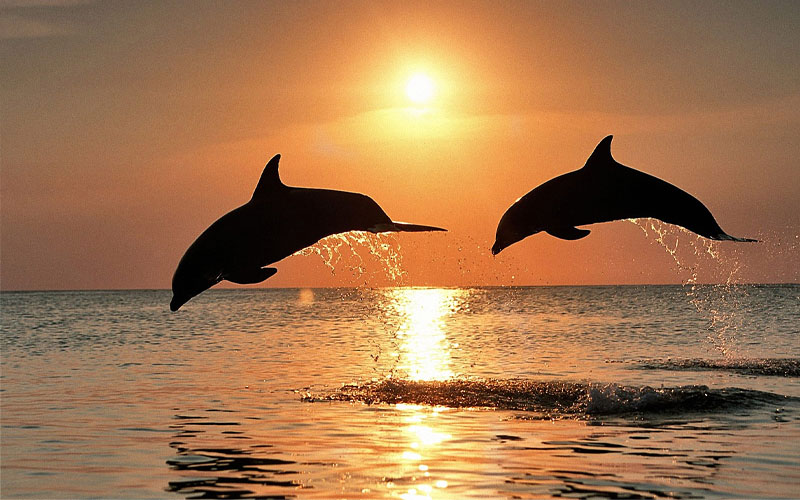 Bali 4 days and 3 nights with dolphin tour