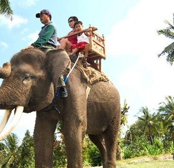 Bali Elephant ride tanah lot tour