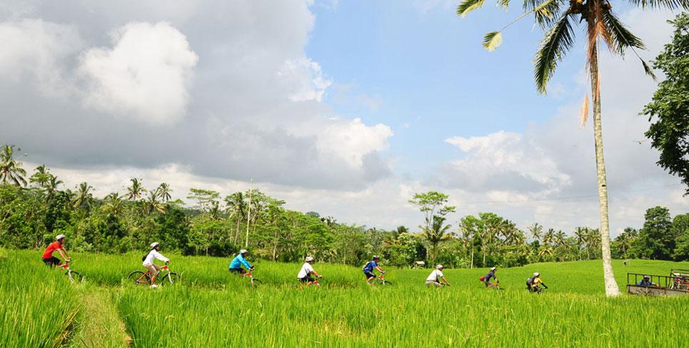 Bali cycling and Ubud tour